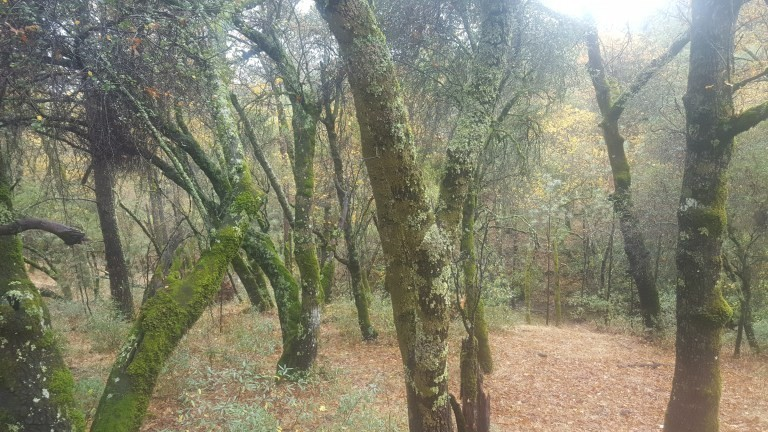 Forest-1